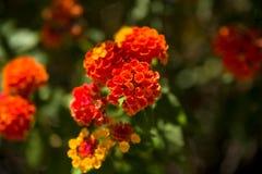 红色花和黄色花在西班牙发现了 库存照片