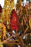 红色花和绿色植物,秋天背景 库存照片
