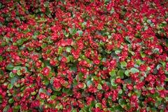 红色花喜欢地毯 库存照片