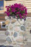 红色花在一个木农村房子附近开花 免版税库存图片