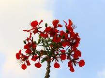 红色花在一个美丽的庭院里开花 图库摄影