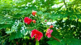 红色花在公园射击grwen 免版税库存照片