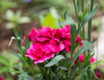 红色花在公园 库存图片