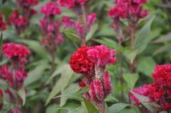 红色花在公园 免版税库存照片