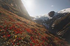 红色花在山,挪威的阳光下 免版税库存图片