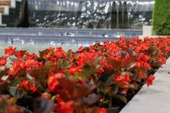 红色花在庭院里 免版税库存照片