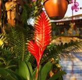 红色花在庭院里 库存照片