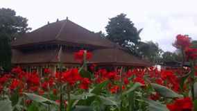 红色花在庭院里 股票视频