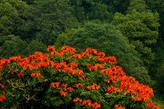 红色花在森林背景中 免版税库存图片