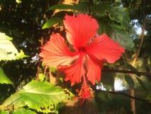 红色花在森林里 库存照片