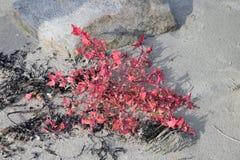 红色花在海底上 免版税库存图片