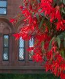 红色花小瀑布在石大厦前面的 图库摄影