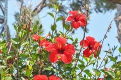 红色花开了花 免版税库存图片
