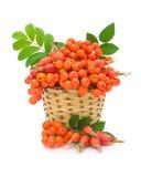 红色花揪和通配在一个空白背景的一个篮子上升了 免版税库存图片