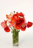 红色花束的鸦片 免版税库存照片