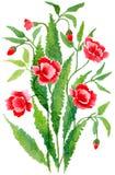 红色花束的鸦片 免版税库存图片