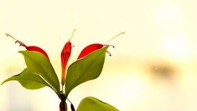 红色花植物卷 2 免版税图库摄影