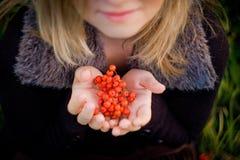红色花楸浆果到女孩的手里 免版税库存照片