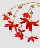 红色花的枝杈 库存图片