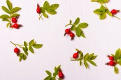 红色花的样式、构成,莓果和绿色叶子 Fl 免版税库存照片