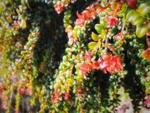 红色花的雨 免版税库存图片