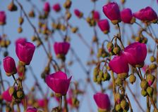 红色花纹花样2 :开花,芽,词根,天空 免版税库存图片