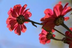 红色花花圈  库存照片