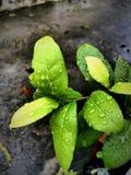 红色花,中等绿色叶子 免版税图库摄影