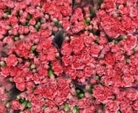 红色花,花束背景 免版税库存照片