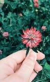 红色花绿色 库存图片