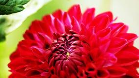 红色花- //beautiful花特写镜头  库存照片