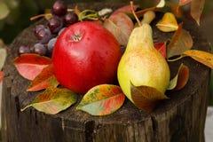 红色苹果、蓝色葡萄和绿色梨在一个老树桩 免版税库存照片