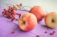 红色苹果和ashberry分支在一块紫色餐巾 免版税图库摄影