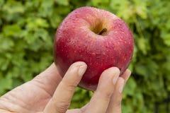 红色苹果在手上 库存照片