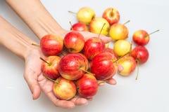 红色苹果在手中增长 库存图片