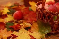 红色苹果柳条筐在秋叶背景的  库存图片