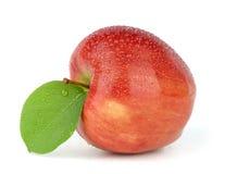 红色苹果的叶子弄湿了 免版税库存图片