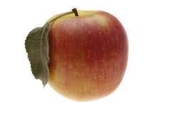 红色苹果的叶子弄湿了 库存照片