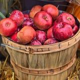 红色苹果篮子  免版税图库摄影