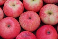 红色苹果背景 库存图片