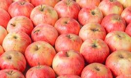 红色苹果行木表面上的 顶视图 库存照片