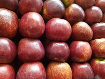 红色苹果行  库存图片