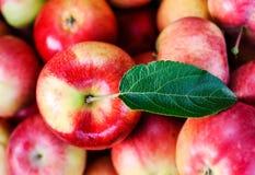 红色苹果计算机 免版税图库摄影