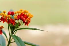 红色草花在冬天 免版税库存图片