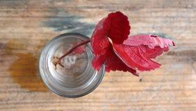 红色草莓叶子在11月 库存照片
