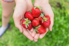 红色草莓在手中 免版税库存图片