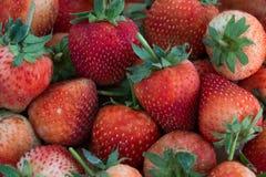 红色草莓,特写镜头,景深 免版税图库摄影