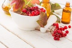 红色荚莲属的植物莓果。同种疗法概念。 图库摄影