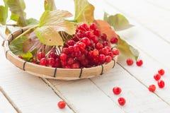 红色荚莲属的植物莓果  图库摄影