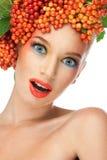 红色荚莲属的植物 免版税库存照片